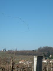 Vol de grues sur les vignes, le printemps arrive!