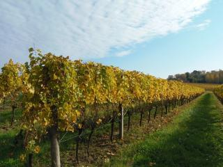 Les vignes prennent leurs couleurs d'automne